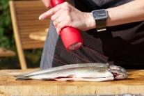 Ryby kupujeme najlepšie v špecializovaných obchodoch alebo chovoch priamo od rybárov. Tak máme istotu, že máme ryby naozaj čerstvé s výbornou chuťou.